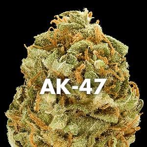 Odmiana Ak47